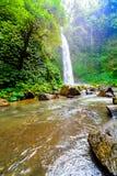 在密集的雨林的瀑布 库存图片