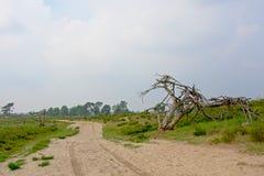 在富兰德铺沙在一个朦胧的荒地风景的路与tres 库存照片