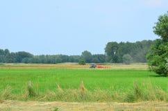 在富兰德领域的割晒牧草tracktors 库存照片
