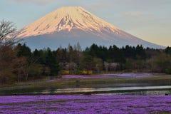 在富士山谷的春天在日本 库存照片