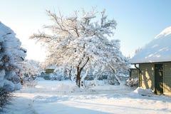 在寒冷的雪盖的议院和庭院树,与清楚,蓝色,天蓝色的天空的晴朗的冬日 库存图片