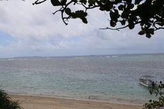 在寒风Fukugi树路,寒风村庄的海滩在冲绳岛,日本 免版税图库摄影