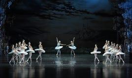 在对的天鹅在愉快的心情芭蕾天鹅湖上升并且跳舞 免版税库存照片