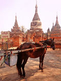 在寺庙前面的用马拉的支架停车处 免版税库存照片