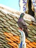 在寺庙屋顶的一只鸽子 免版税库存图片