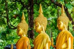 在寺庙泰国的三个大菩萨金雕象 库存图片