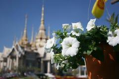 在寺庙的花 库存照片
