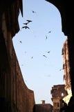 在寺庙的鸟 免版税图库摄影