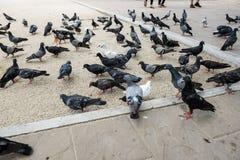在寺庙的鸽子 免版税库存照片