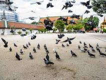在寺庙的鸽子 免版税库存图片