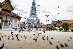 在寺庙的鸽子 库存图片