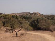 在寺庙谷,西西里岛,意大利的风景 免版税库存照片