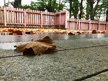 在寺庙走廊的湿秋天叶子 库存图片
