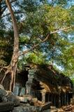 在寺庙建筑学的树在吴哥窟 免版税库存图片