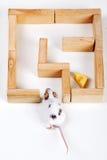 在寻找干酪的迷宫的聪明的鼠标 库存图片