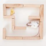 在寻找干酪的迷宫的聪明的鼠标 免版税库存照片