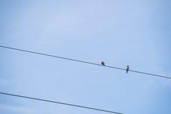 在导线持有人的两只鸟 库存照片