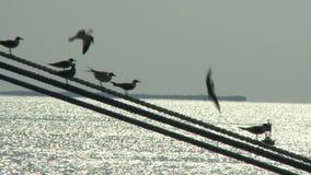 在导线时间间隔的鸟 影视素材