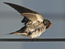 在导线栖息的鸟 免版税库存照片