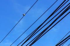在导线的一只鸟 免版税库存图片