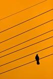 在导线的一只鸟 免版税图库摄影