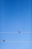 在导线的两只燕子 库存图片