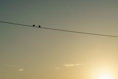在导线的两只鸟 免版税库存图片
