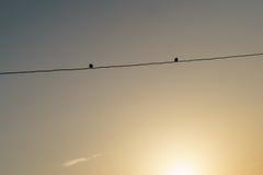 在导线的两只鸟 图库摄影