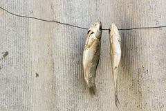 在导线的干鱼 免版税图库摄影