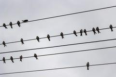 在导线的燕子,如从下面被看见 免版税库存照片