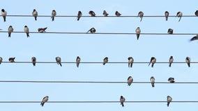 在导线的鸟坐象音乐笔记 股票视频