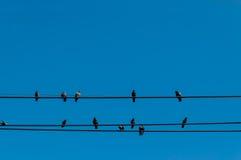 在导线的鸟被隔绝反对清楚的蓝天 库存照片