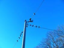 在导线的鸟 库存图片