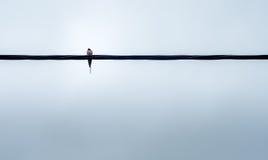 在导线的鸟 免版税库存图片