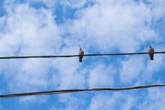 在导线的鸽子 免版税库存照片