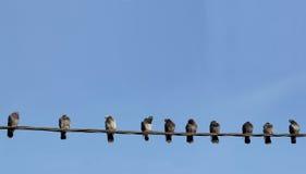 在导线的鸽子 免版税库存图片