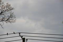 在导线的2只鸟 免版税库存照片