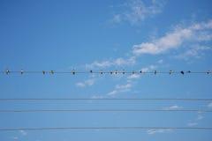 在导线蓝天的鸟 免版税库存图片