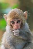 在寿山,猴子山胡闹在高雄市,台湾 免版税库存照片