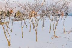 在小不生叶的树后掩藏的金黄色的眺望台 免版税图库摄影
