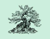 在小丘的盆景树 免版税图库摄影