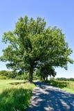 在小乡下公路的大树在梅克伦堡福尔波门德国 库存图片
