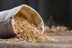 在小亚麻制大袋的糙米 免版税库存照片