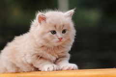 在小包的小猫 免版税库存图片