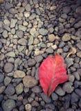 在小卵石的红色干燥叶子 免版税库存照片