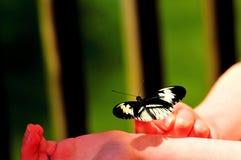 在小女孩手指的钢琴关键蝴蝶 免版税库存照片
