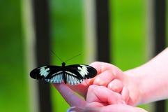 在小女孩手指的钢琴关键(heliconius)蝴蝶 库存照片