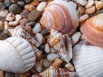 在小小卵石背景的贝壳 宏指令 库存图片