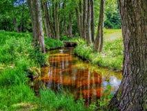 在小小河反射的水附近的树在中央法国 免版税库存照片