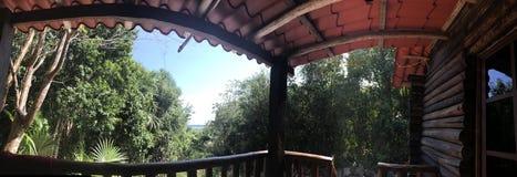 在小屋之外的植被 库存图片